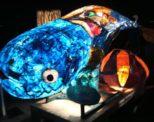 夜に浮かぶ光の魚!?