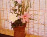 時にはゆったり花を愛でながら・・・自分にご褒美